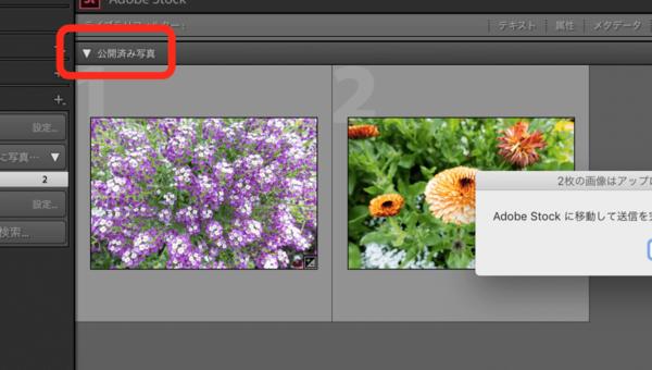 Adobe Lightroom ClassicからAdobe Stockへ写真を送信するための設定/写真を公開
